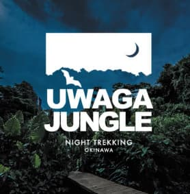 UWAGA JUNGLE