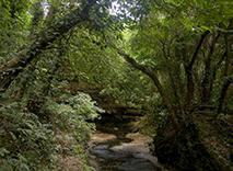 ガンガラーの谷 生命の神秘を辿る旅へ アカギの森 2