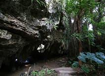ガンガラーの谷 生命の神秘を辿る旅へ 武芸洞 2
