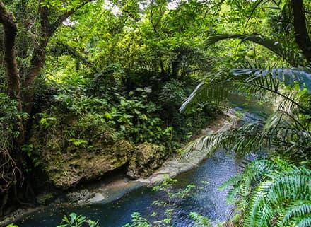 ガンガラーの谷 生命の神秘を辿る旅へ 豊かな自然が残る亜熱帯の森・2