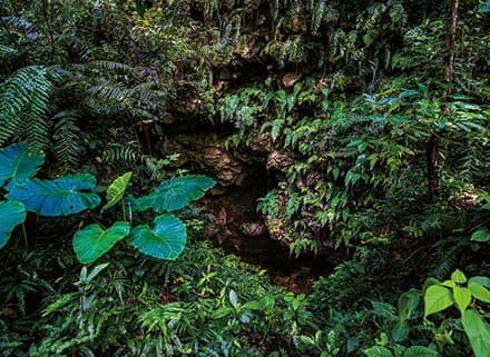 ガンガラーの谷 生命の神秘を辿る旅へ 豊かな自然が残る亜熱帯の森・3