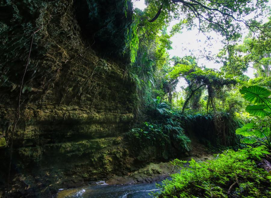 ガンガラーの谷 生命の神秘を辿る旅へ 豊かな自然が残る亜熱帯の森・1